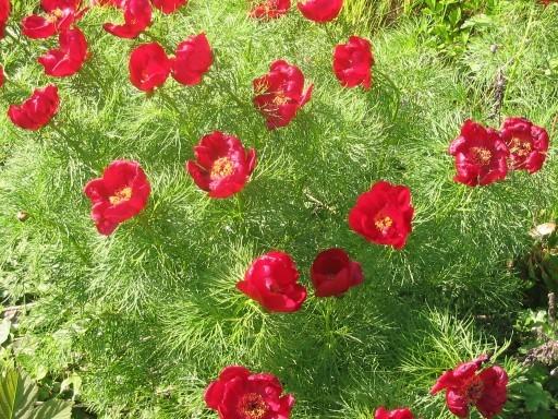 Цветы для сада и огорода