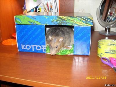 Ловушки для крыс из коробки