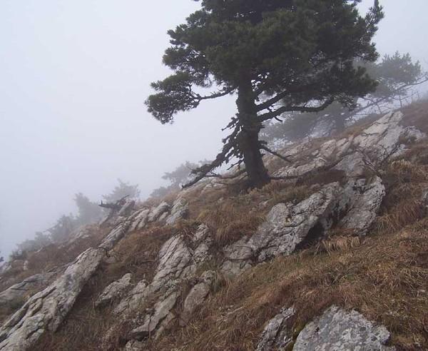 На голой вершине стоит одиноко