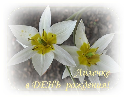 Поздравление с днем рождения лилии прикольные