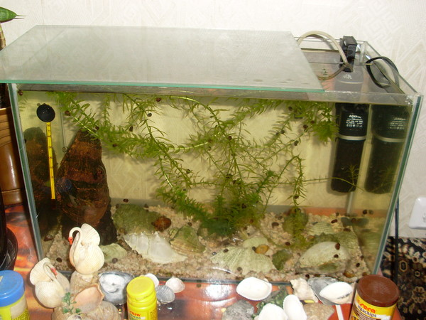 Почему рыбка петушок выпрыгивает из аквариума