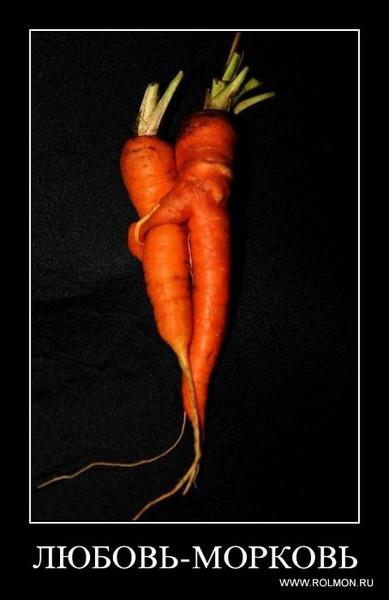 Поздравление на свадьбу вот тебе морковка 16