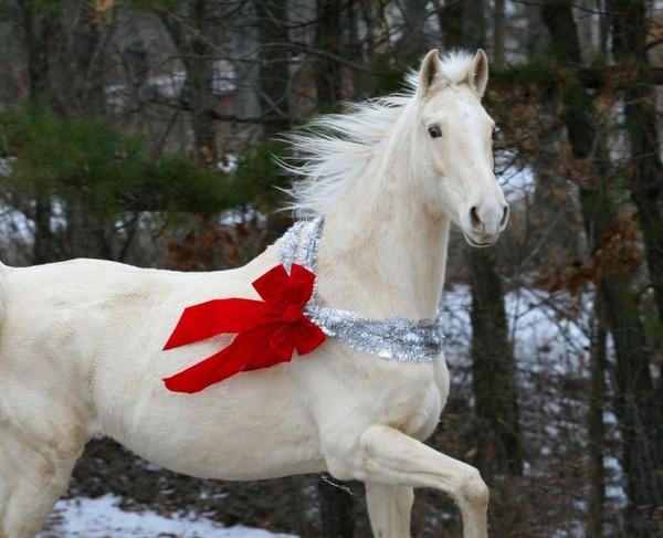 Белая лошадь в подарок