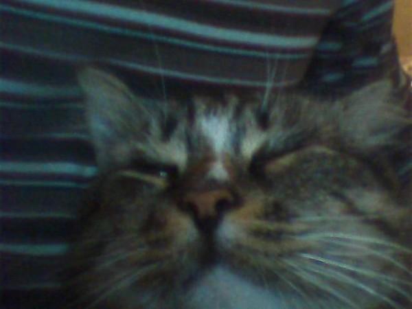Глазные заболевания у котов