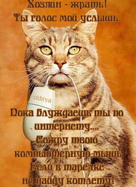 Прикольные поздравления про кота