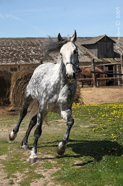 Фотосток: кони и лошади (522 фото)
