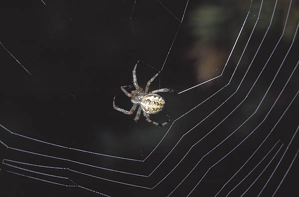 Как сделать паутину как у паука