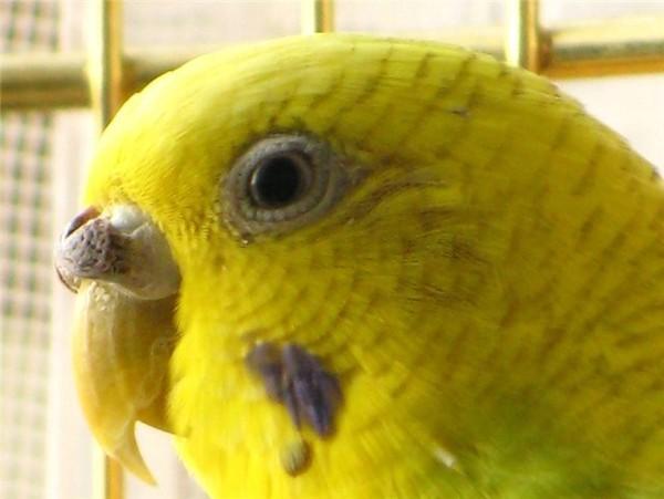 Почему попугай прикрывает один глаз