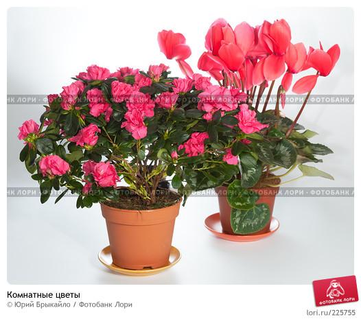 Цветы неблагоприятные для дома