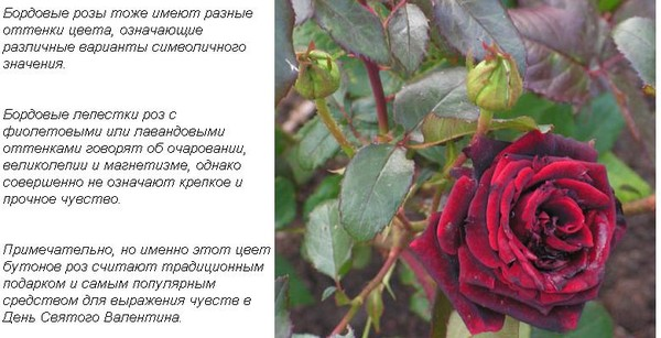 Значение подарка одна красная роза