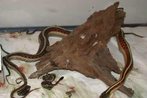 Какие виды змей бывают - 8293
