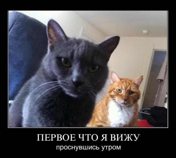 Кошка и женщина картинки