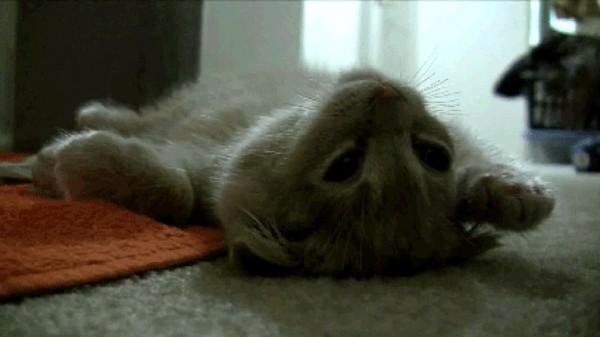 xkcd Cat Proximity