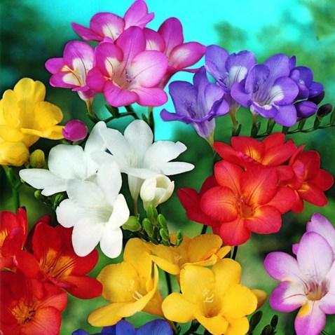 самые красивые цветы картинки: