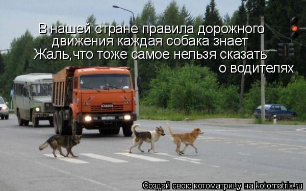 Анекдот по правилам дорожном движение