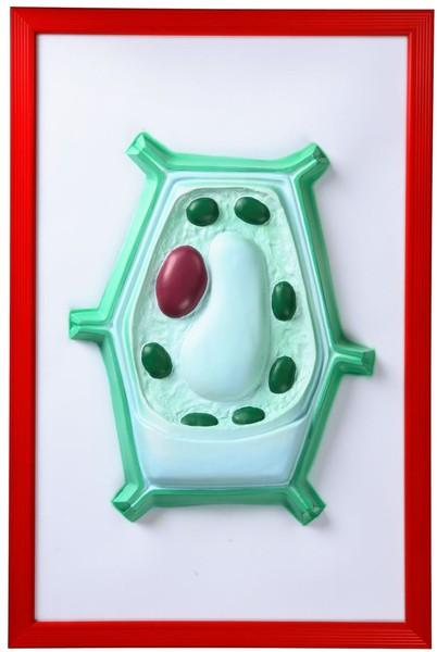 Как сделать макет клетки по биологии 5 класс 103