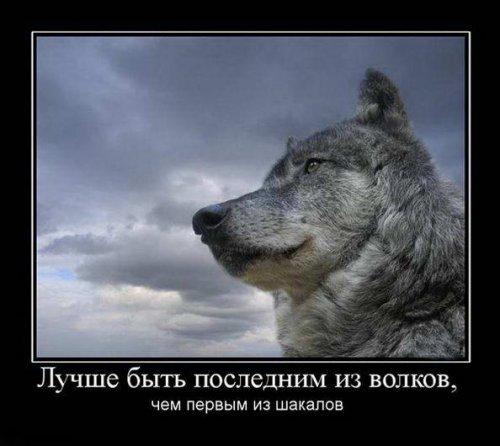 http://otvet.imgsmail.ru/download/fff28859b0a85c64794cc7db31f9fb4c_i-1015.jpg