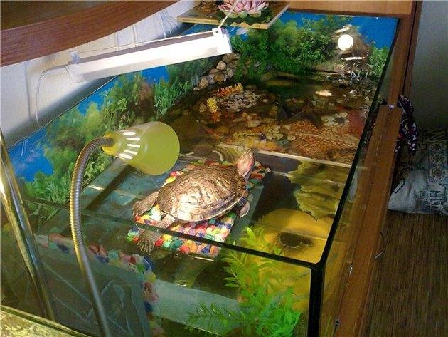 Как спят красноухие черепахи в домашних условиях