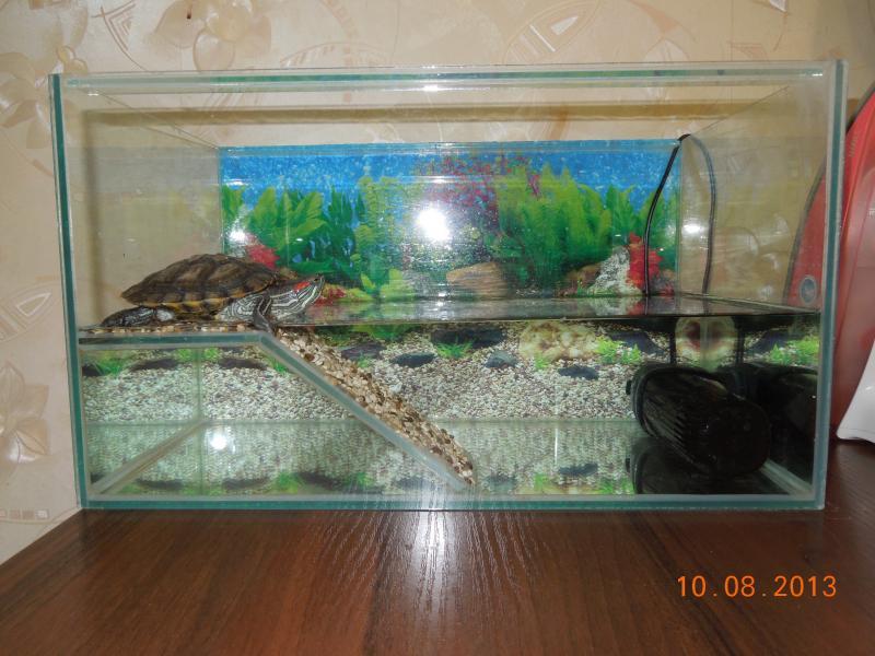 Аквариум для водных черепах