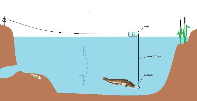 ловля толстолобика подводное видео