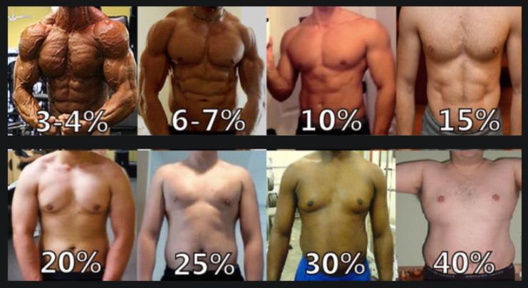 Масса жира в теле человека