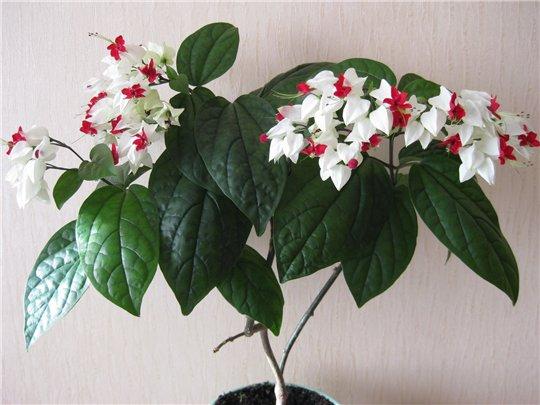 Ответы@Mail.Ru: подскажите название комнатного растения