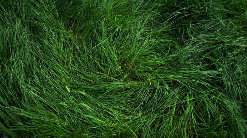 трава текстура  № 1310003 без смс