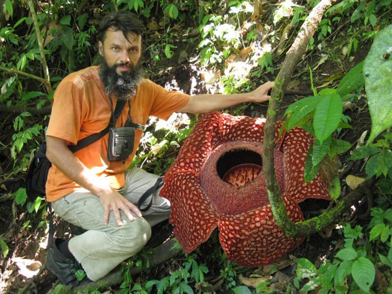 Самый большой цветок в мире раффлезия