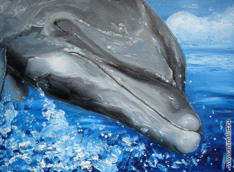 монеты к чему сниться спасение дельфинов древностию