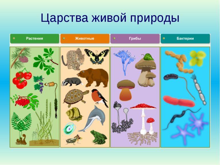 Царства живой природы в схеме
