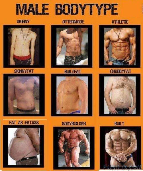 average body fat for women № 79567