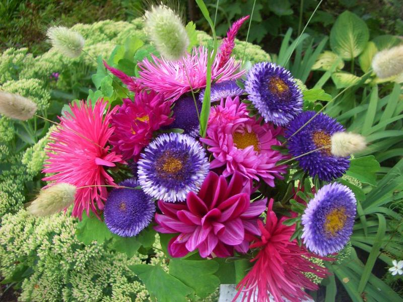 Садовые цветы букет
