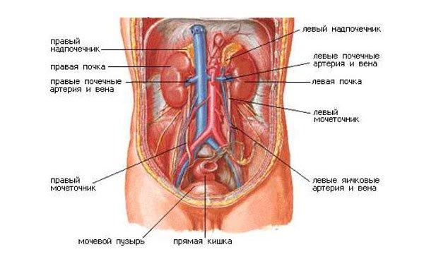 pokazat-polovie-organi-zhenshini