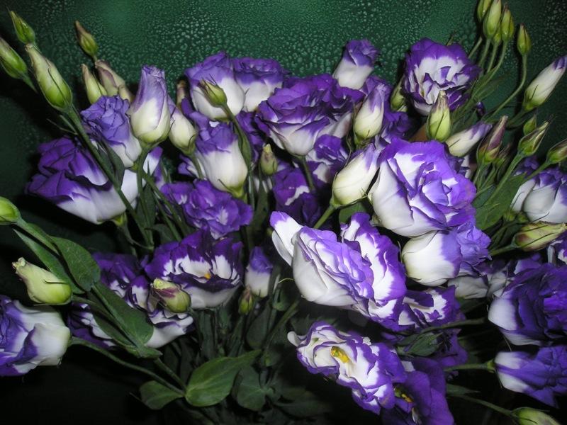 Похожи на розы цветы