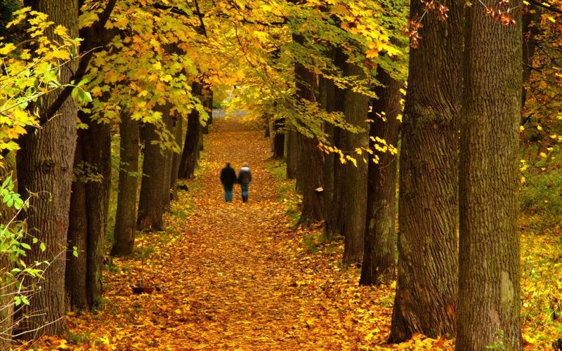 деревья парк осень роща  № 3186166 загрузить