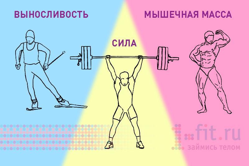 Выносливость мышц в домашних условиях