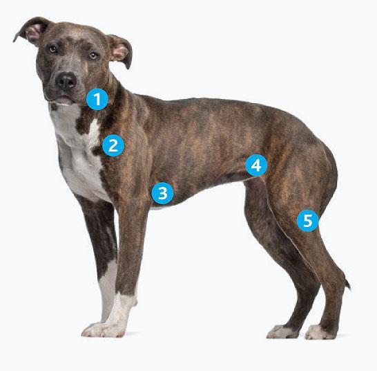 Как лечить воспаление лимфоузлов на шее у собаки