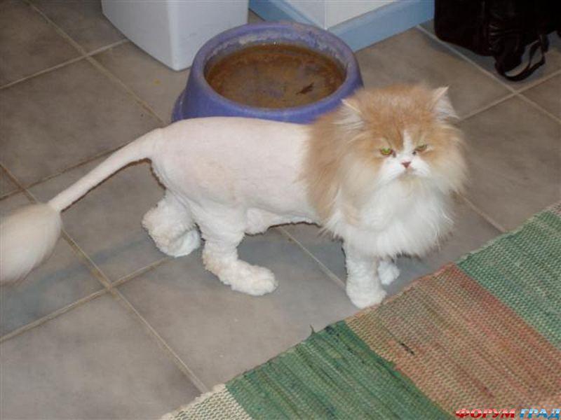 Подстричь кота домашних условиях