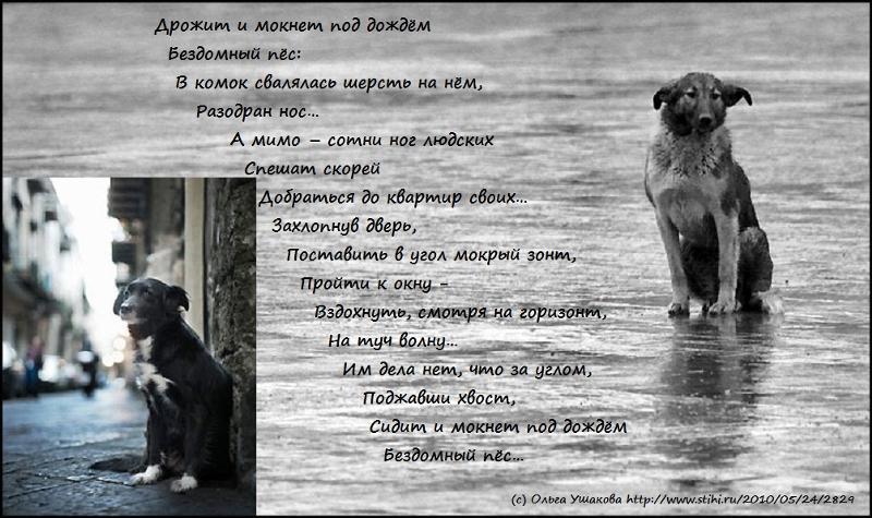 Грустный стих про щенка