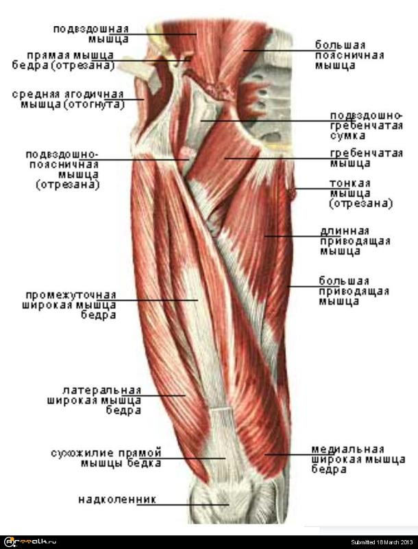 Что делать если болит четырехглавая мышца бедра