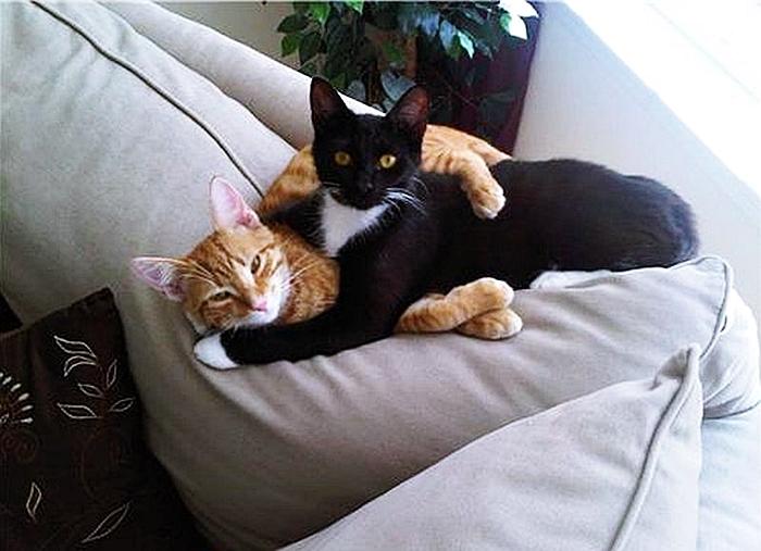 Любовь кошек фото