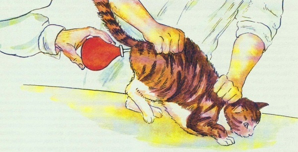 Чем клизму кошке в домашних условиях