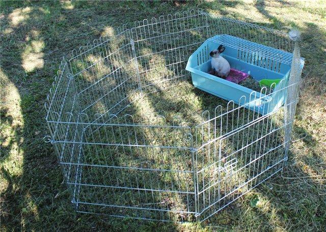 Иротика eролики qо с животными на даче