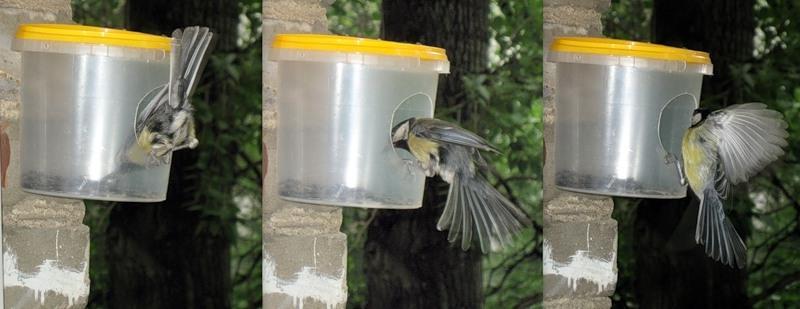 Кормушки своими руками для птиц из бутылки