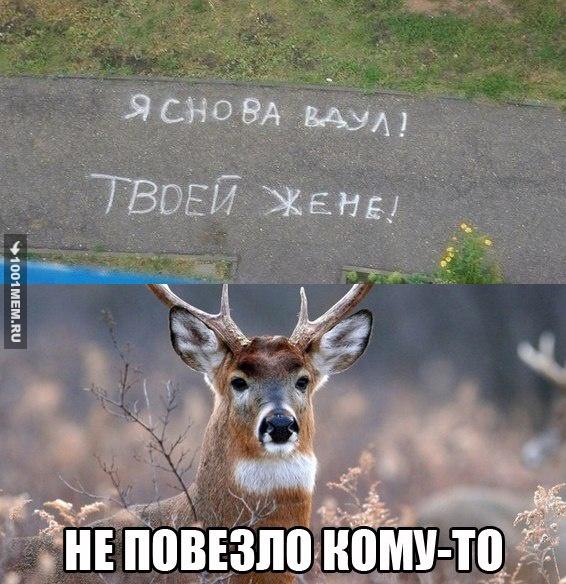 zhalkiy-rogonosets