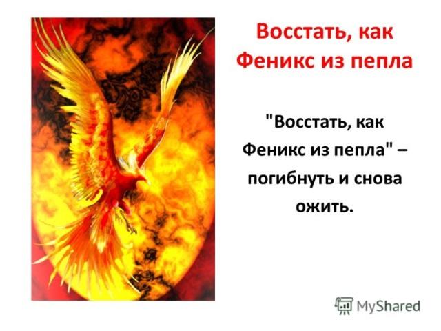 Жар птицу афоризм 183