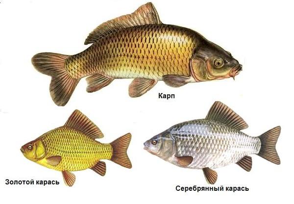 Промысловые рыбы озера Балхаш