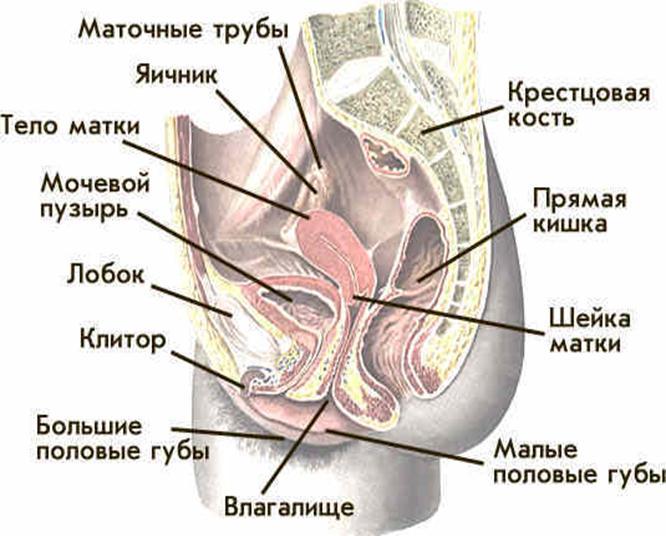 lev-i-telets-seksualnaya-sovmestimost