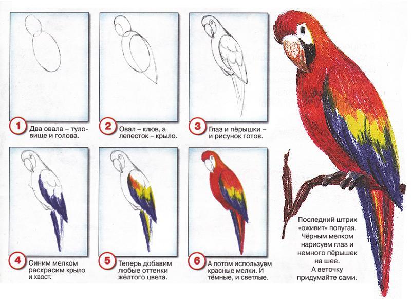 Как научится рисовать попугаев