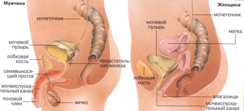 antitela-k-hlamidii-trahomatis-igg-polozhitelniy